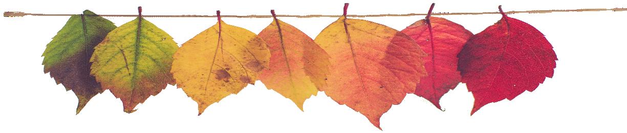 Банер на Осень